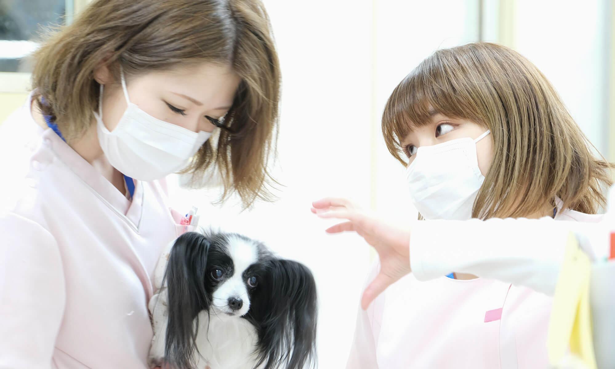 動物病院看護師