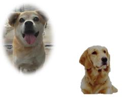 目がキラキラ・口元がゆるむ 人や犬から目や顔をそらす