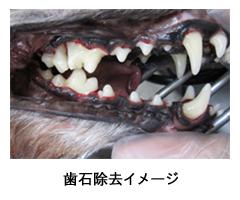 歯石除去イメージ