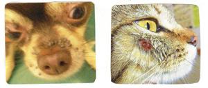 マダニにかまれた犬猫