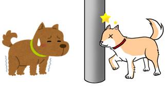ぶつかる犬